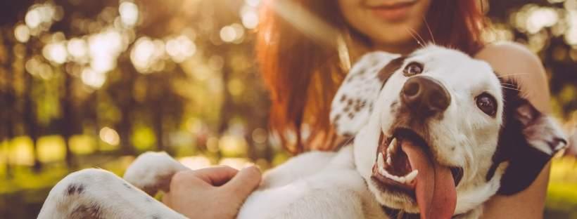 Gevaren voor huisdieren liggen op de loer tijdens zomermaanden