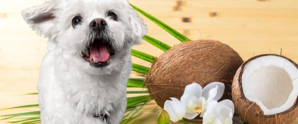 Kokosolie voor honden