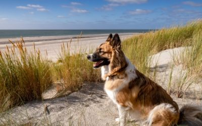 4 bestemmingen voor een zomervakantie met je hond!