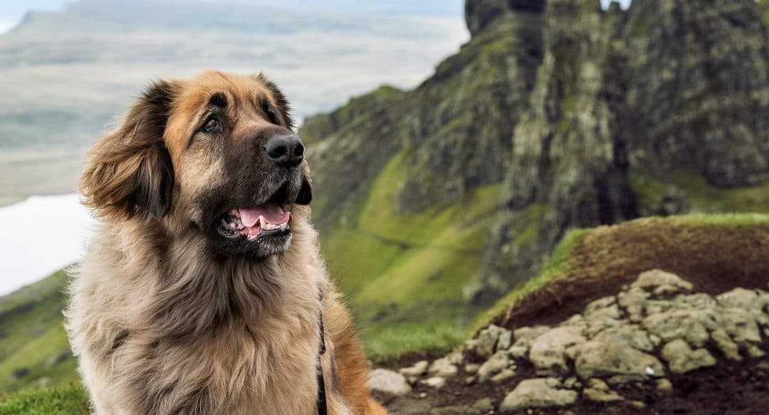 Dog influencer: Leika
