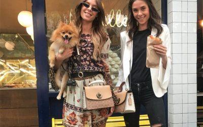 Hondje Louis leeft het leven in Mexico
