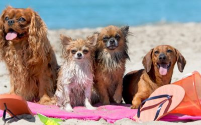 Hoe komt je hond de zomer door?