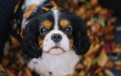 Dog influencer: Boris