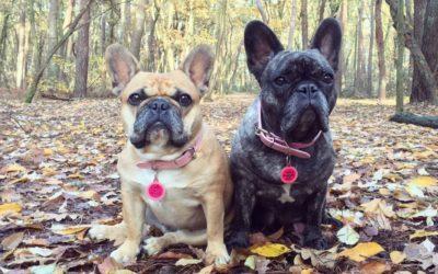 Dog influencer: Jolie & Jaeda