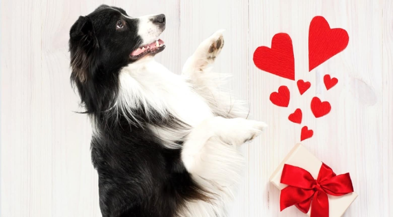Hondenverwennerij met Valentijnsdag!