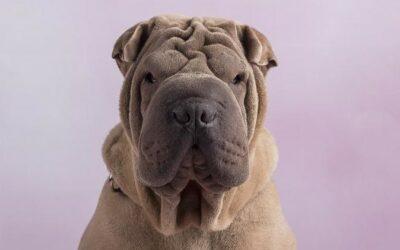 Dog influencer: Botox